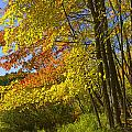 Autumn Forest Scene In West Michigan by Randall Nyhof