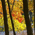 Autumn Forest Scene by Randall Nyhof