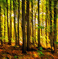 Autumn Forest by Steve Harrington