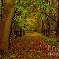 Autumn Forest Trees by Martyn Arnold