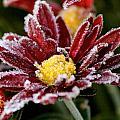 Autumn Frost by Tiffany Erdman