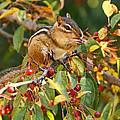 Autumn Fruit Snatcher by Theo OConnor