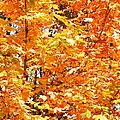 Autumn Fury by Chalet Roome-Rigdon