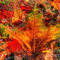 Autumn Fusion 8 by Jeff Breiman