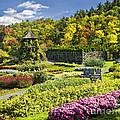 Autumn Garden by Claudia Kuhn