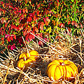 Autumn Garden by Duane McCullough