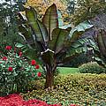 Autumn Garden by Sally Weigand