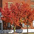 Autumn Glory by Denise Mazzocco