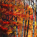 Autumn Glory I by Dale Jackson
