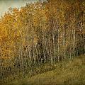Autumn Glory by Lucinda Walter