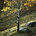 Autumn Glow - Yellowstone by Belinda Greb