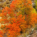 Autumn Glow by Greg Norrell