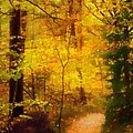 Autumn Glow by Lutz Baar