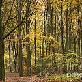 Autumn Gold by Anne Gilbert