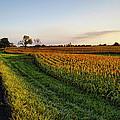 Autumn Gold by Cricket Hackmann