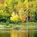 Autumn Gold by Gene Cyr