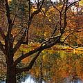 Autumn Gold by Marcel  J Goetz  Sr