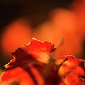 Autumn Grape Leaf Macro by Charmian Vistaunet