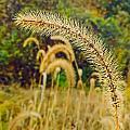 Autumn Grass by Robert Mitchell