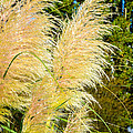Autumn Grass by Tikvah's Hope