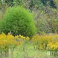 Autumn Grasslands by Maria Urso