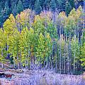 Autumn Grazing Horses Bonanza by James BO  Insogna