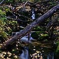 Autumn Greens by Jeremy Rhoades