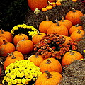 Autumn Harvest 6 by Rodney Lee Williams