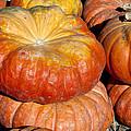 Autumn Harvest by David Millenheft