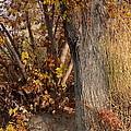 Autumn Hideaway by Carol Groenen