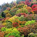 Autumn Highland Scenic Highway by Thomas R Fletcher