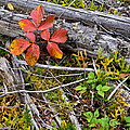 Autumn Highlights by Rob MacArthur