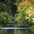 Autumn Highlights On The Quinnebaug River by Neal Eslinger