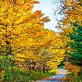 Autumn Hike - Paint by Steve Harrington
