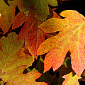 Autumn Hues by Living Color Photography Lorraine Lynch