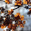 Tardiva Hydrangea by Carolyn Stagger Cokley