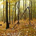 Autumn II by Irimia  Alex - Adrian