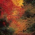 Autumn Impression by Bobbie Climer
