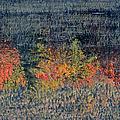 Autumn Impressionism by Juergen Roth