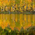 Autumn Impressions 2 by Dusty Demerson