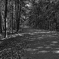 Autumn In Black And White by Thomas Young