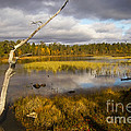 Autumn In Finland Near Inari by Heiko Koehrer-Wagner