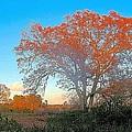 Autumn In Georgia by James Potts