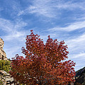 Autumn In Glenwood Canyon - Colorado by Brian Harig