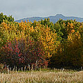 Autumn In Idaho by Heather Coen