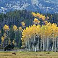 1m9359-autumn In Jackson Hole Ranch Country by Ed  Cooper Photography