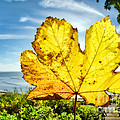Autumn In Lyme Regis by Susie Peek