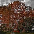Autumn In Mt Vernon by David Patterson