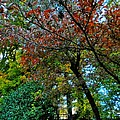 Autumn In Raleigh 009 by Lance Vaughn