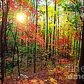 Autumn In South Carolina by Denis Tangney Jr